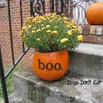 pumpkin as planter - Dogs Don't Eat Pizza