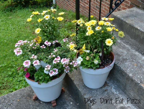 DIY project, painted planters, easy project, curb appeal