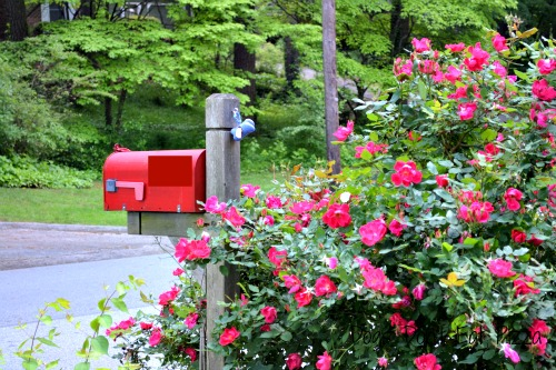 paint your mailbox - curb appeal - Mohawk Homescapes