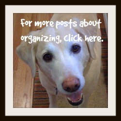 organization posts button - Dogs Don't Eat Pizza