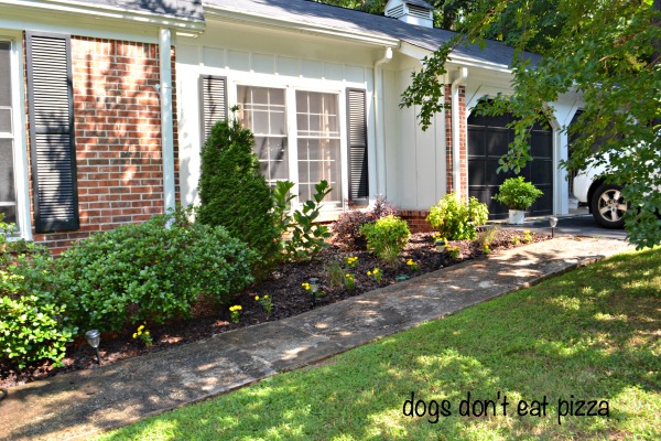 Front garden bed - how to create a beautiful garden bed - Dogs Don't Eat Pizza