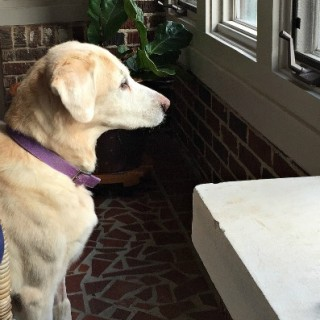 Bear back on duty - Dogs Don't Eat Pizza