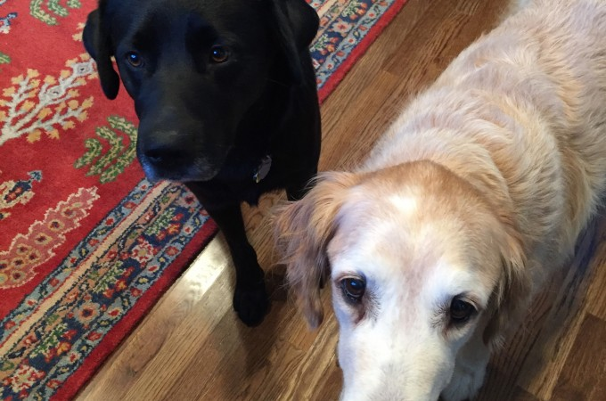Meet Elvis Parsley Dog Cooper - dogsdonteatpizza.com