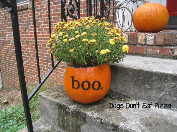Create a fall pumpkin planter - it's easy, inexpensive, and a fun way to welcome fall! From DogsDontEatPizza.com