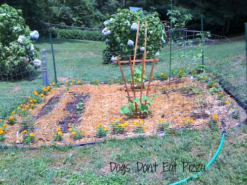 Finished garden after planning 2011- thediybungalow.com