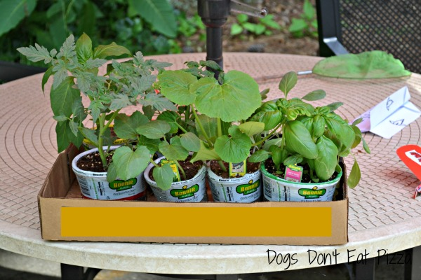 Planning the garden - different plants - thediybungalow.com
