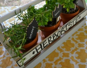 Plant an herb garden - home projects in thirty minutes or less