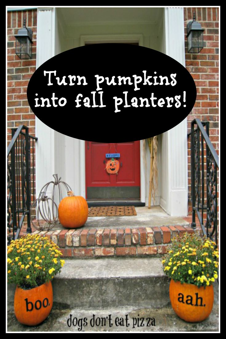 Create fall pumpkin planters for your yard - it's easy, inexpensive, and even compostable! From DogsDontEatPizza.com