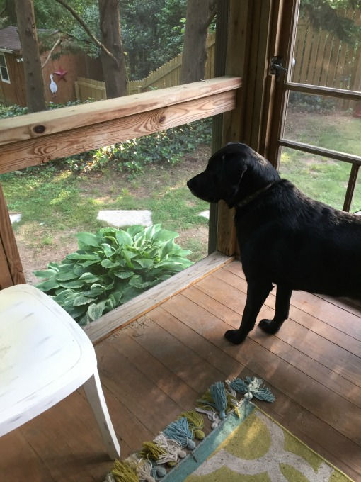 How to fix a screened porch when for example a dog runs through it - thediybungalow.com