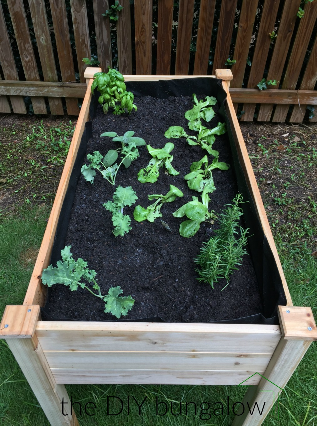 Raised garden bed with lettuce kale and herbs - thediybungalow.com